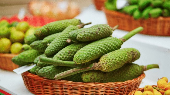 The Monstera Deliciosa fruit can be eaten and is said to taste like a mix between pineapple and banana