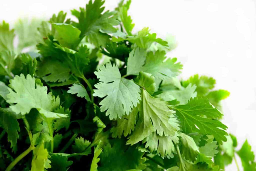 Cilantro is an exotic herb