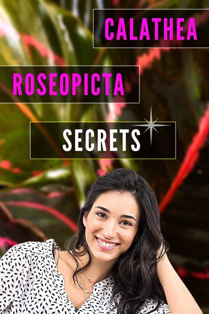 Calathea Rosepicta Secrets Update
