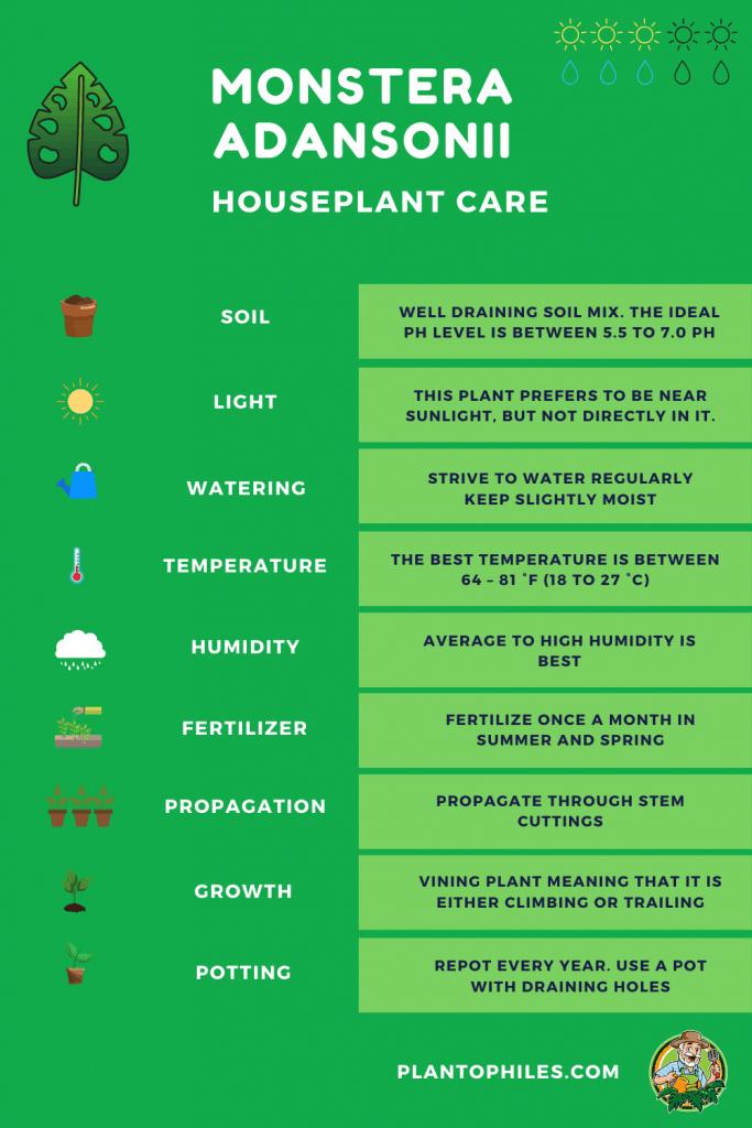 Monstera Adansonii Plant Care Sheet