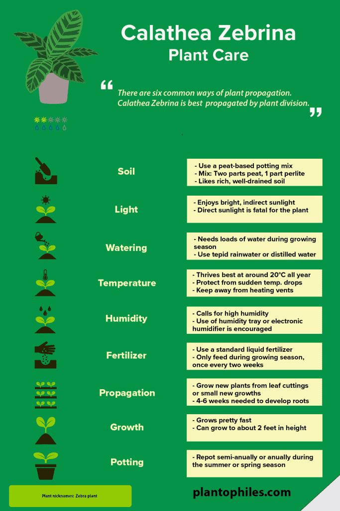 Calathea Zebrina Plant Care Infographic
