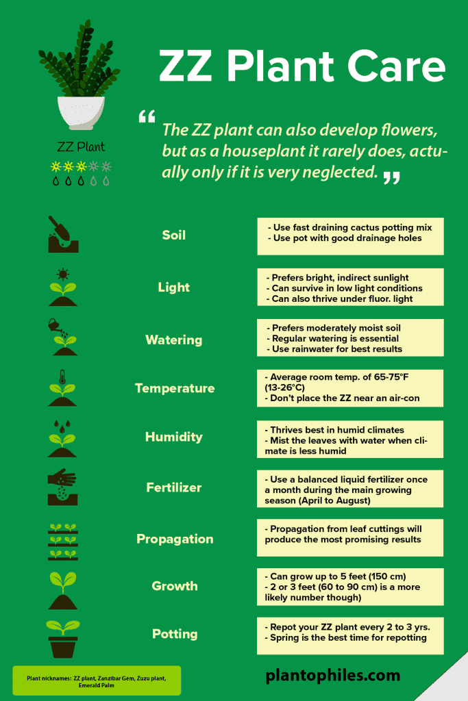 ZZ Plant Care Infographic
