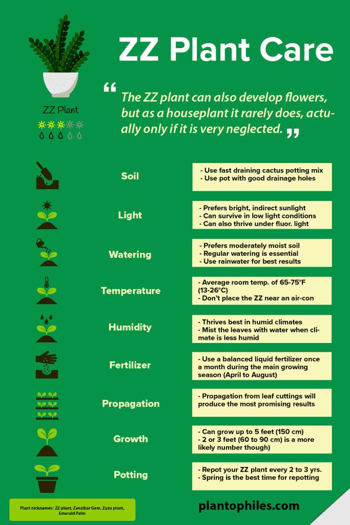 ZZ Plant Care Infographic