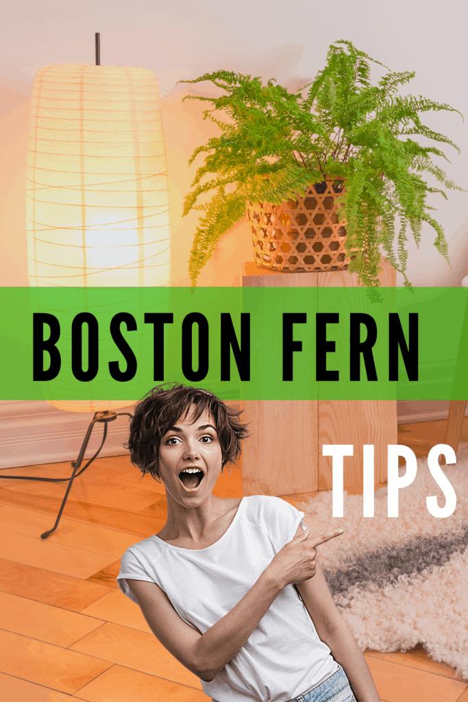 Boston Fern Tips