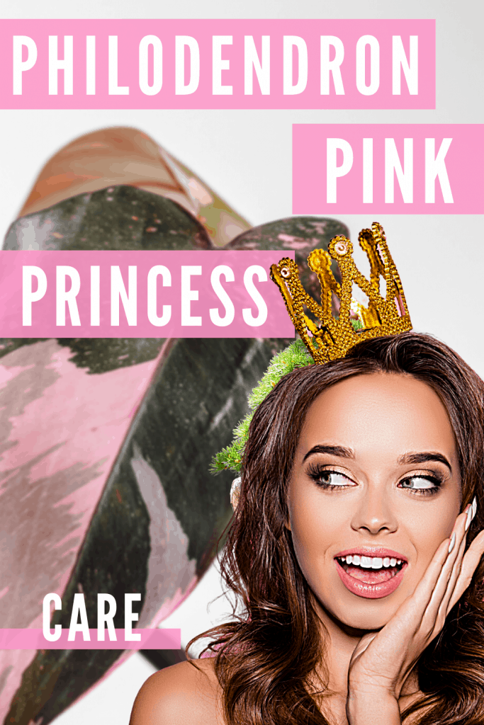 Philodendron Pink Princess Plant Care Guide 1