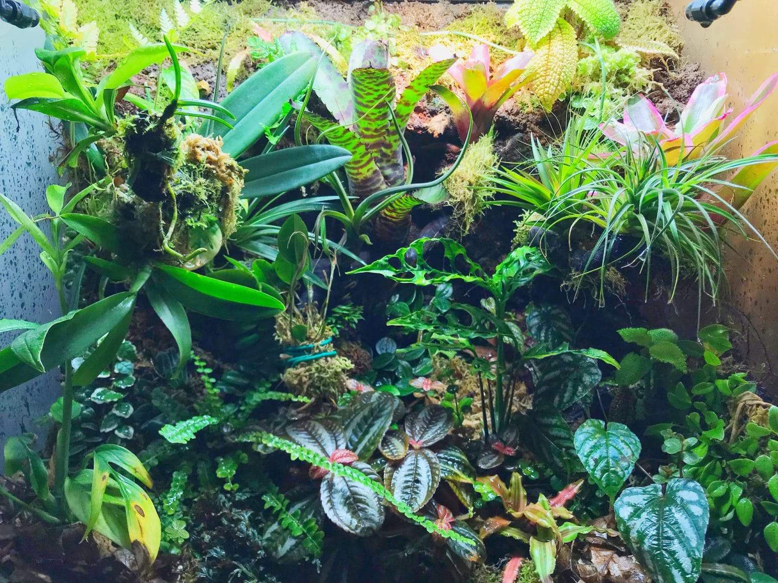 Bioactive Vivarium