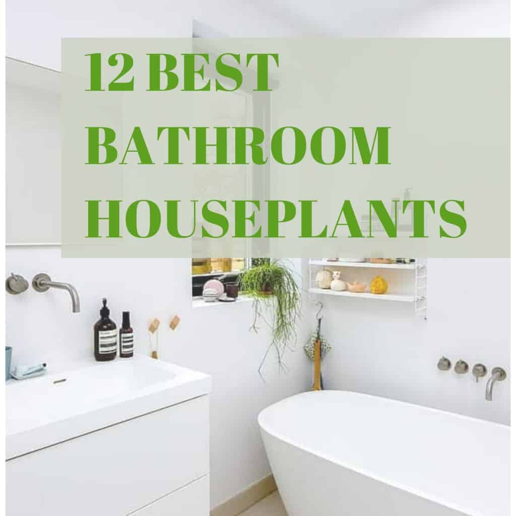 12 Best Bathroom Houseplants
