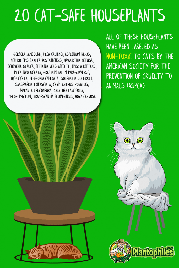 Houseplants Non-Toxic to Cats