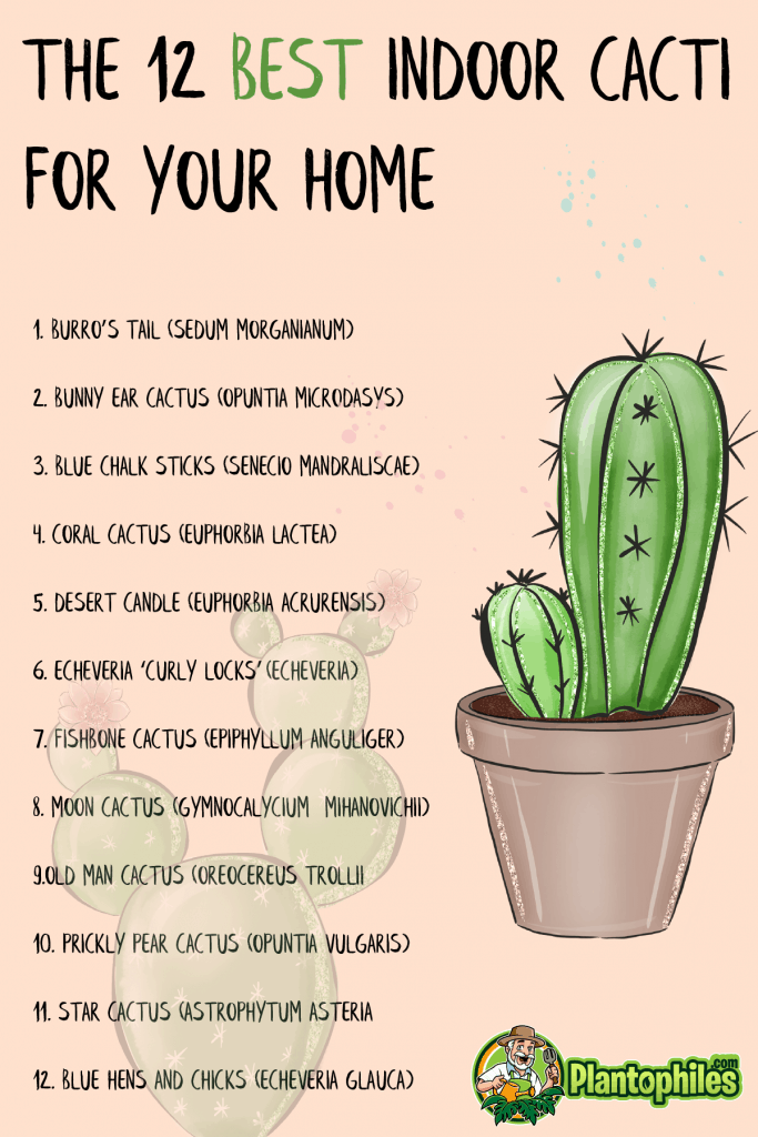 The 12 Best Indoor Cacti for your Home