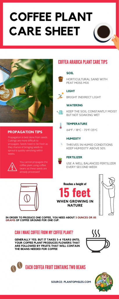 Coffee Plant Care Sheet