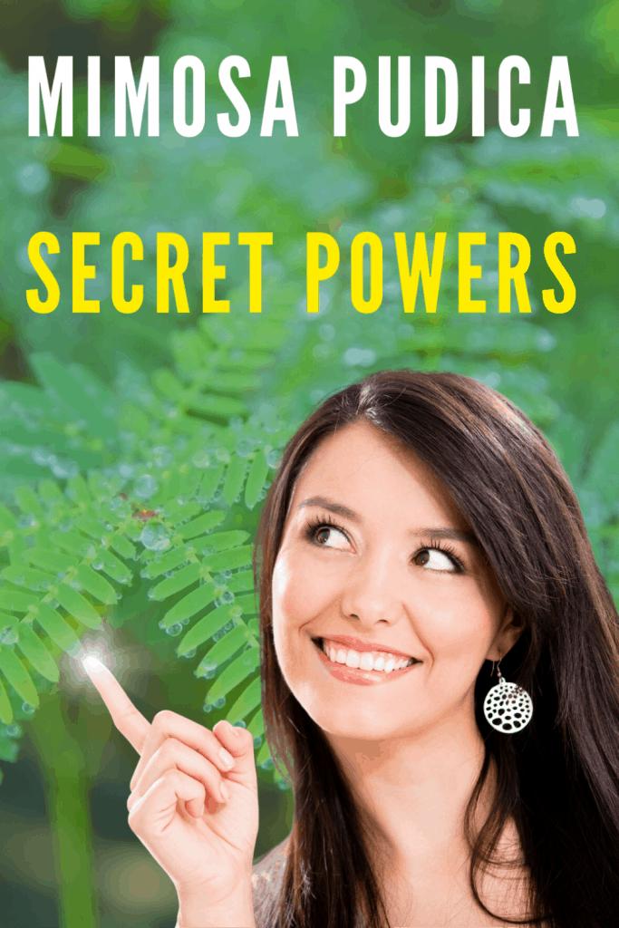 Mimosa Pudica Secrets