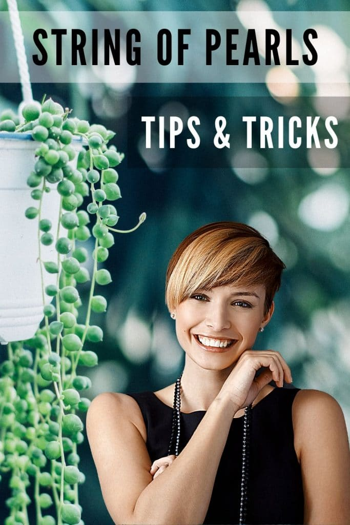 String of Pearls Tips & Tricks