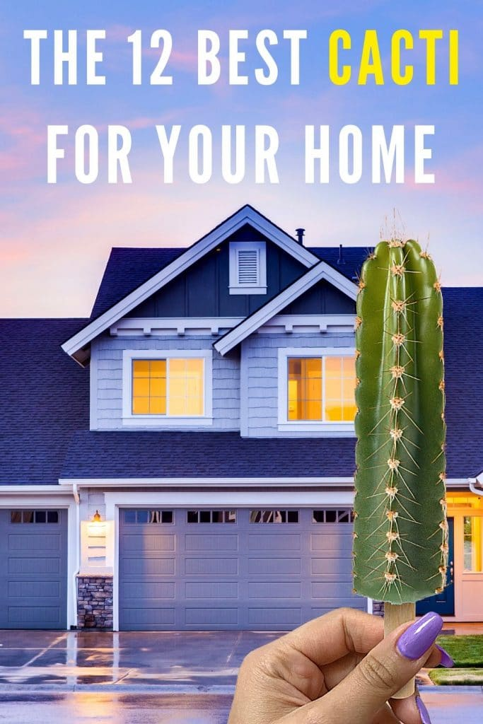 The 12 Best Cacti for your Home