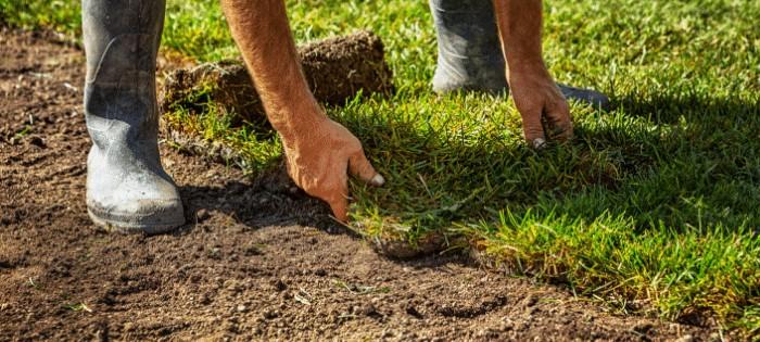 Lawn Care Basics 1