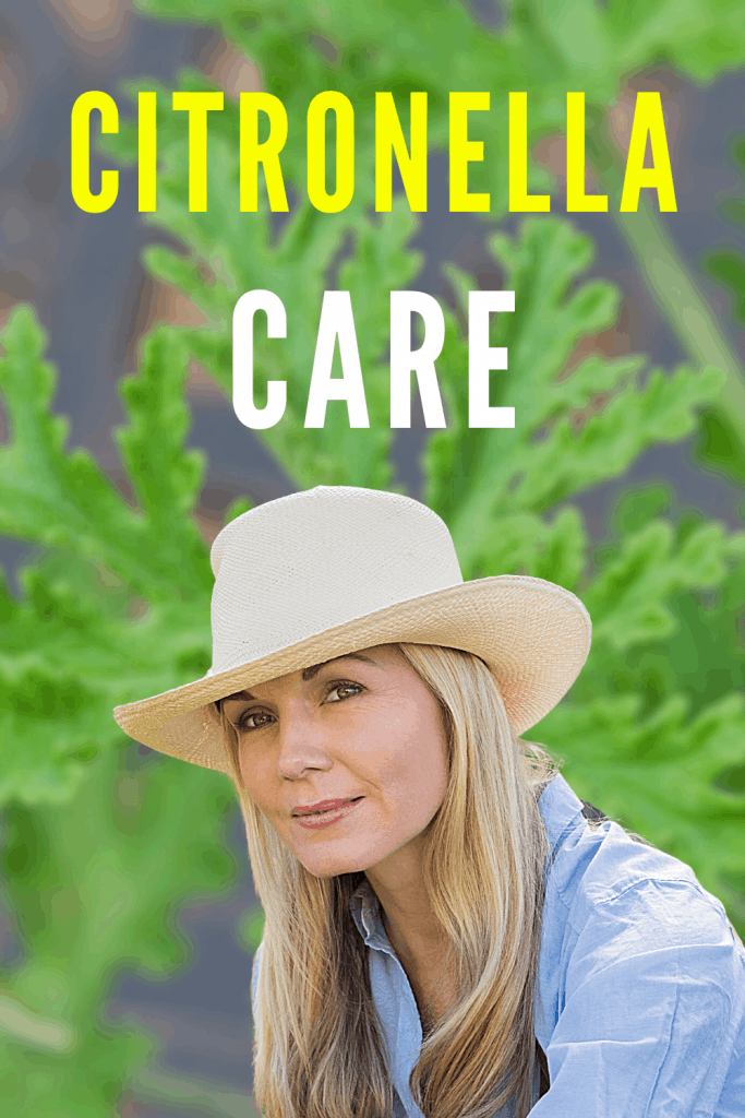 Citronella Care Guide
