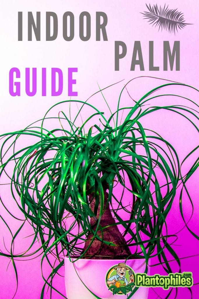 Indoor Palm Plant Care Guide