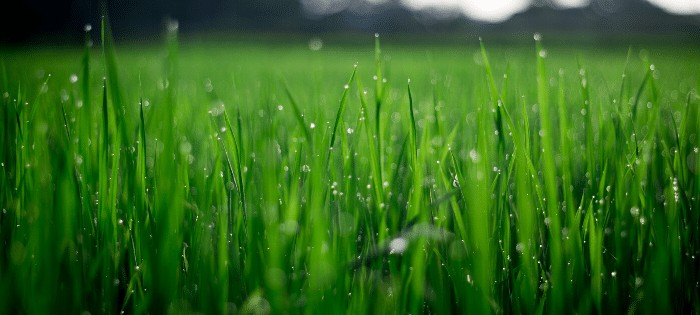 How often to water the lawn