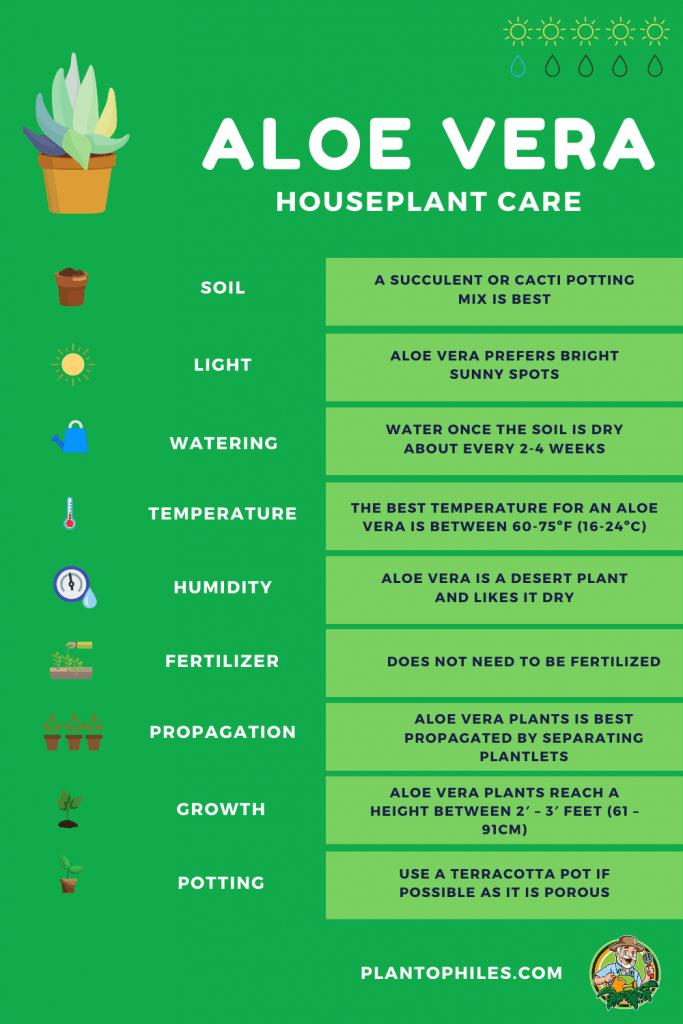 Aloe Vera Houseplant Care Sheet
