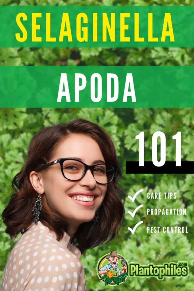Selaginella Apoda Plant Care 101