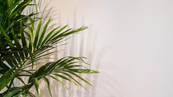 Best houseplants for low light