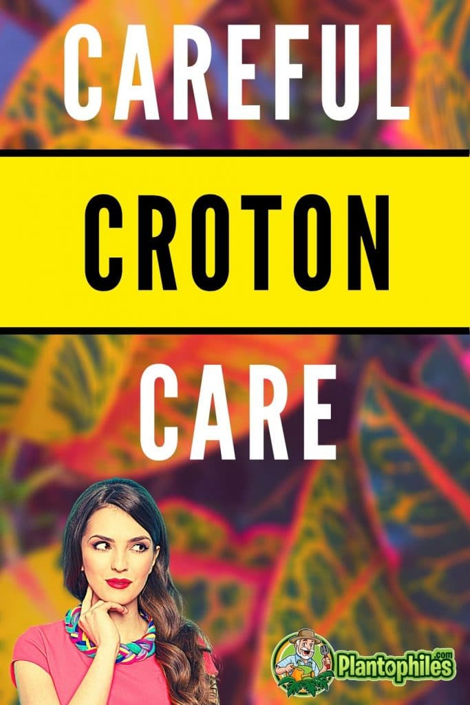 Careful Croton Care