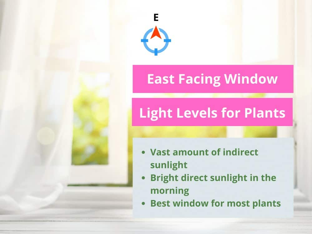East Facing Window Light Cheat Sheet
