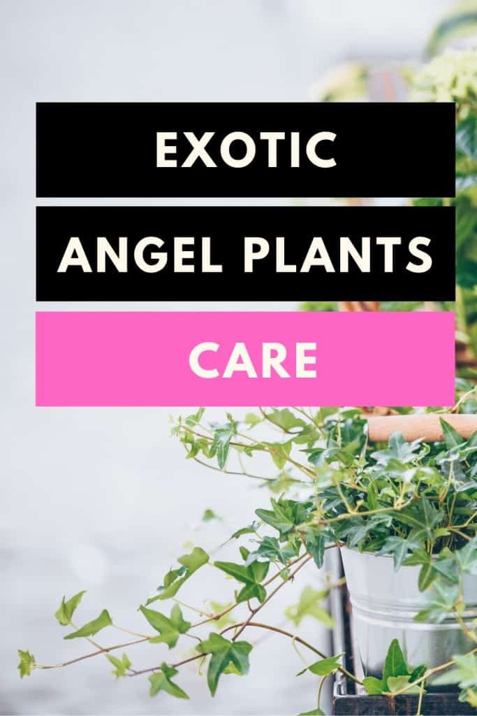 Exotic Angel Plants