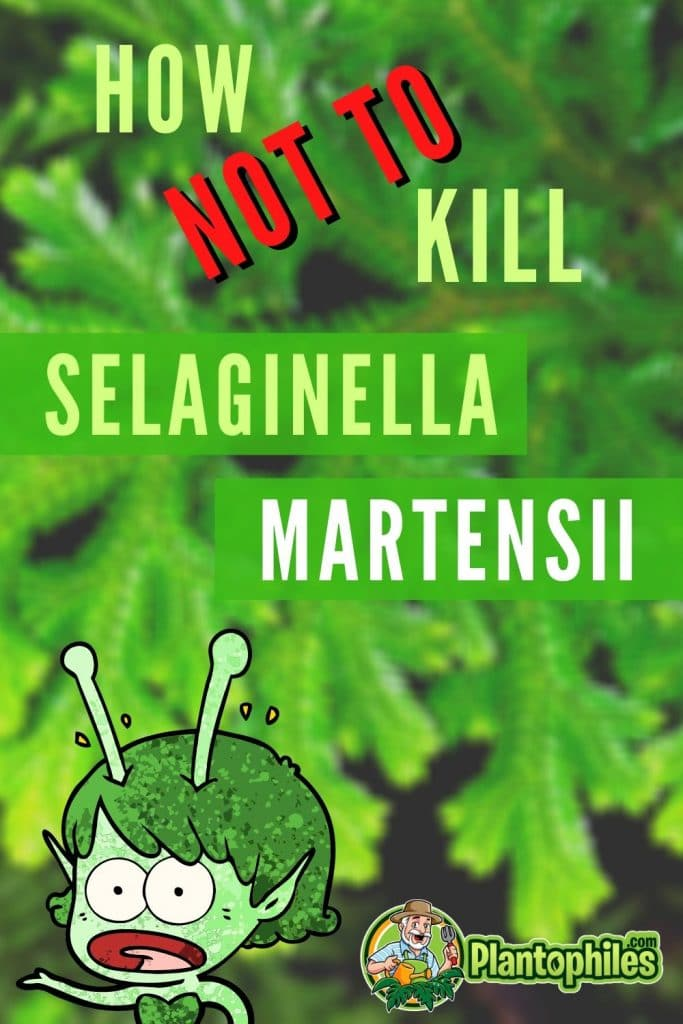 How Not To Kill Selaginella Martensii