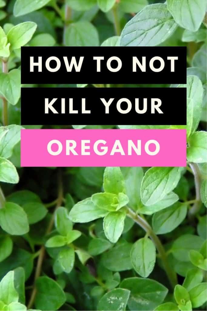 How to not kill your Oregano