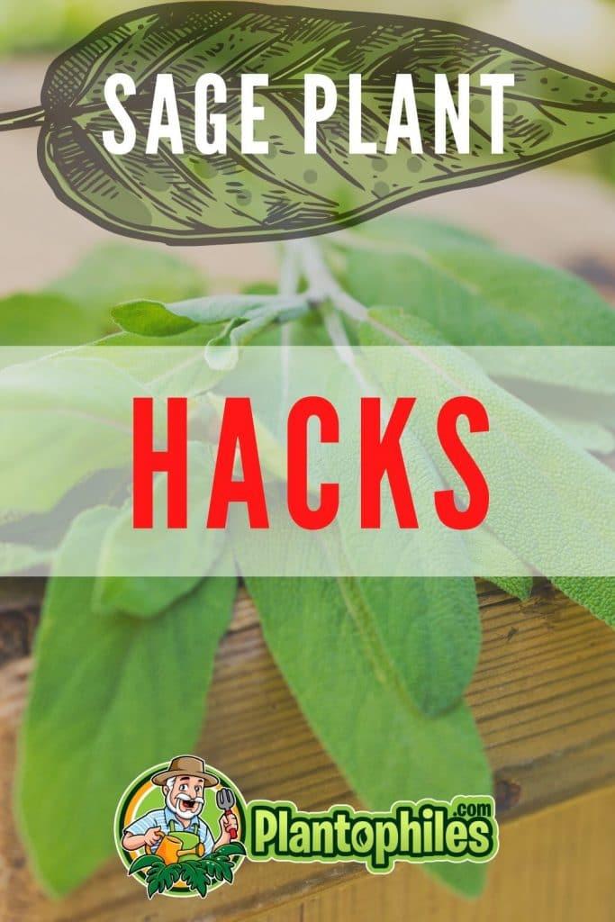Sage Plant Hacks