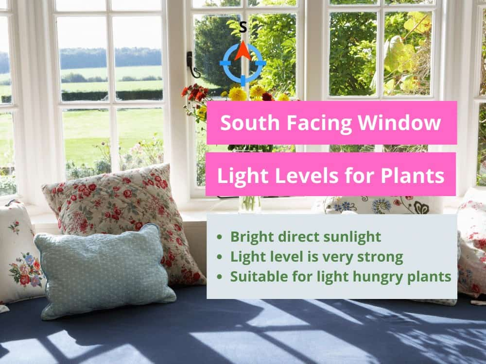 South Facing Window Light Cheat Sheet
