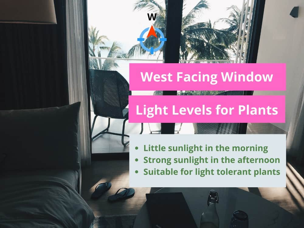 West Facing Window Light Cheat Sheet