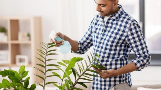 ZZ Plant grown in low light