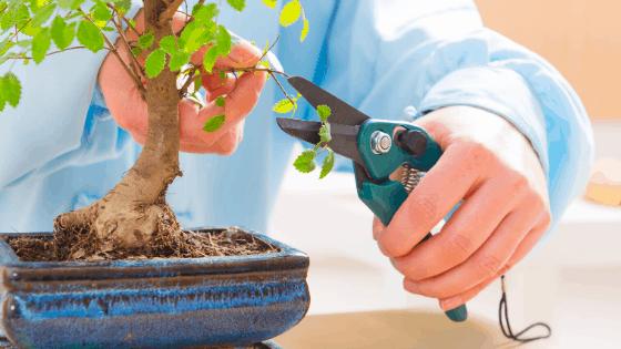 Bonsai Tree Care – The Complete Guide 1