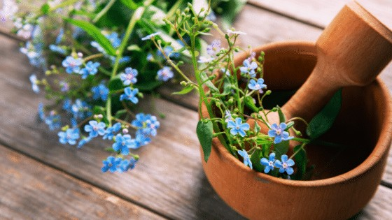 Forget-Me-Not plant profit from pruning and deadheading in order to grow and flower even better.