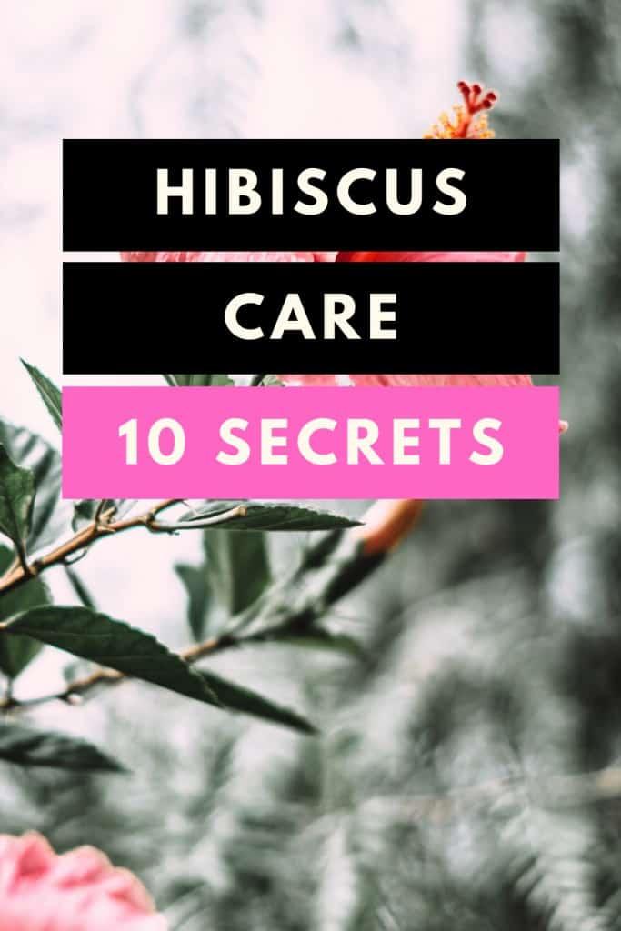 Hibiscus Care - 10 Secrets
