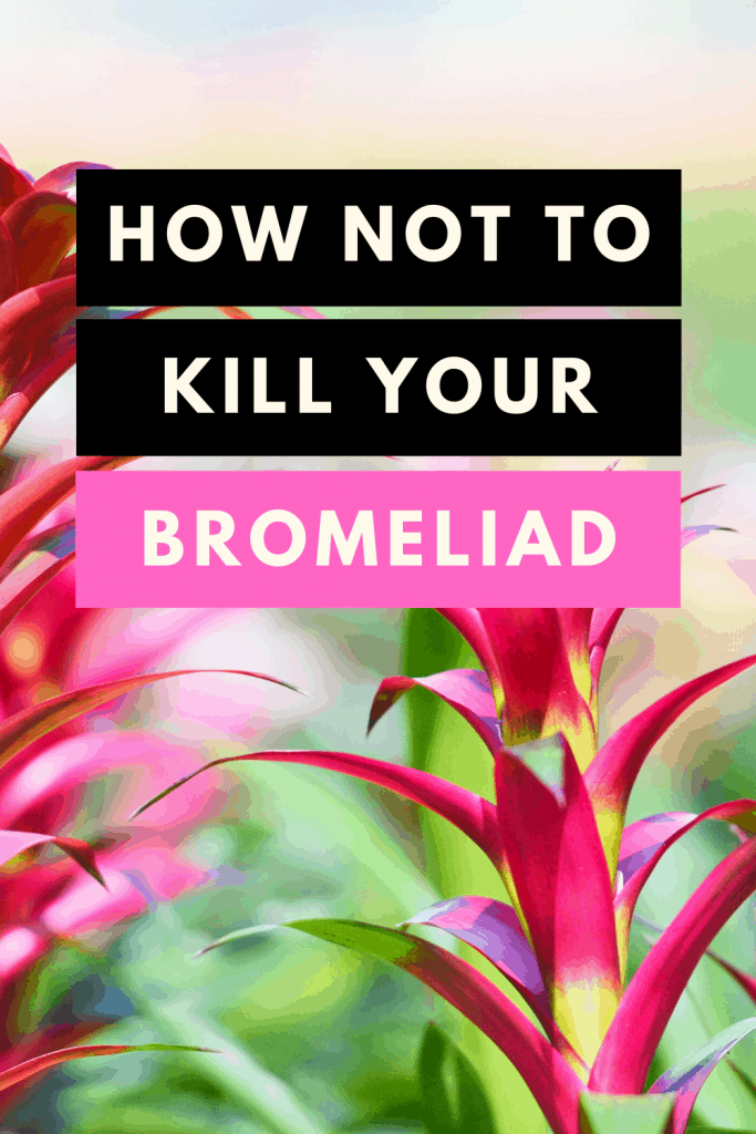 How Not To Kill Your Bromeliad