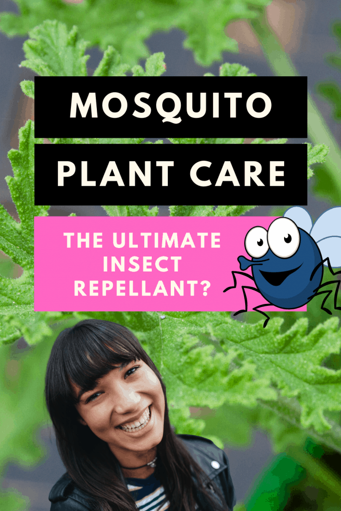 Mosquito Plant Insect Repellant