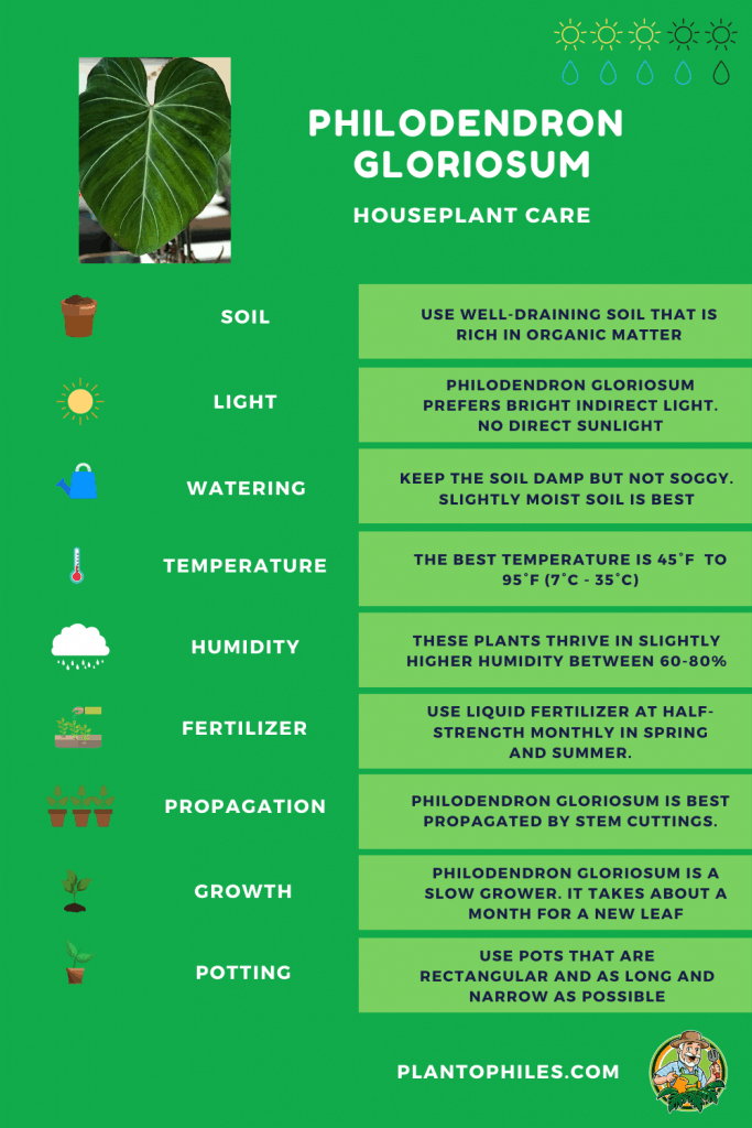 Philodendron Gloriosum Care Sheet