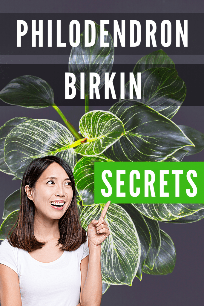 Philodendron Birkin Guide