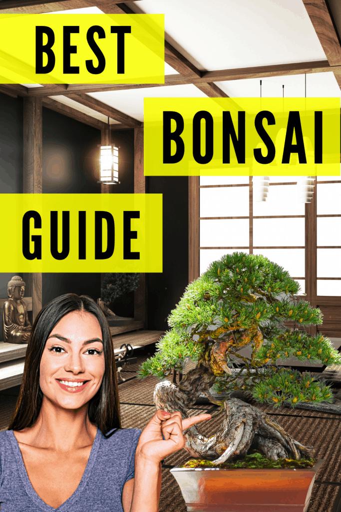 Bonsai Plant Care