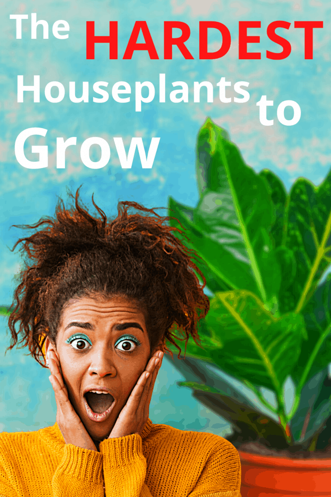 The Hardest Houseplants to Grow