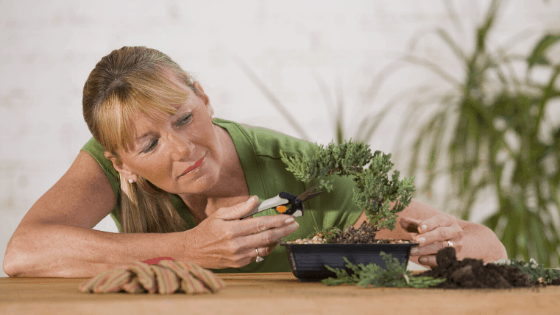 The right Bonsai tree care is essential for a happy plant