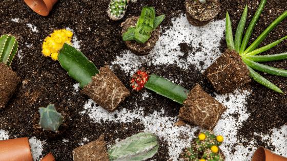 When does it make sense to repot a plant?
