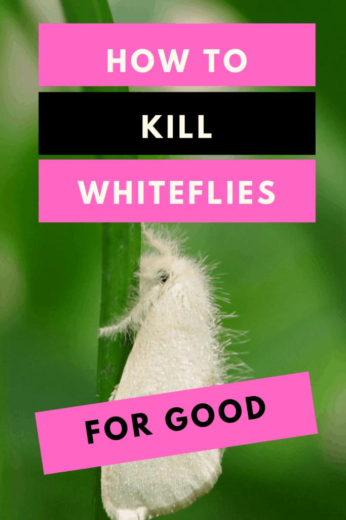 Whiteflies On Plants - #1 Best Remedy Hacks 1