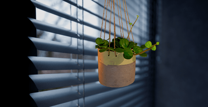 The 7 Best Hanging Plants for Low Light Environments