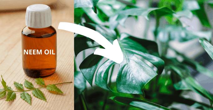 Neem Oil on Houseplants