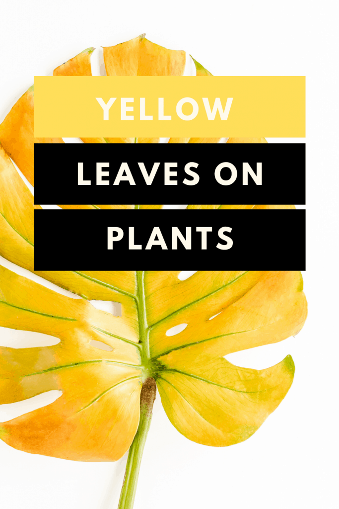 Yellow Leaves On Plants - 10 Things You Need to Know 1