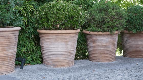 Terracotta pots have great heat retention abilities