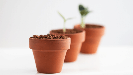 Are Terracotta Pots Good For Plants?